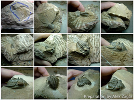 Trilobite Preparation Sequence - Metacanthina issoumourensis