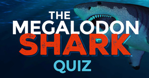 Megalodon Quiz - Test Your Prehistoric Shark Knowledge