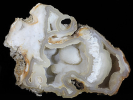 Florida State Fossil - Agate Replaced Fossil Coral