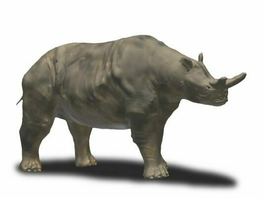 Artists reconstruction of a Titanothere.  By Nobu Tamura (http://spinops.blogspot.com)