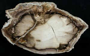 Petrified wood is a classic example of Permineralization where the original, organic wood material has been replaced by silica and other minerals.