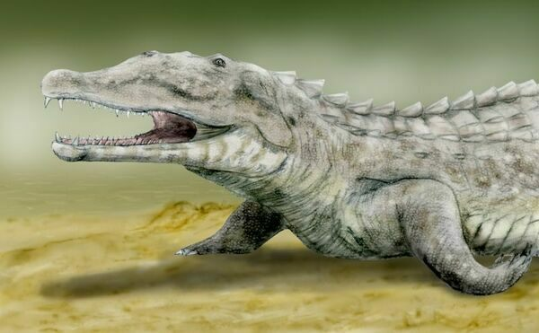 Leptosuchus (Smilosuchus) gregorii, a phytosaur from the Late Triassic of North America. By Nobu Tamura (http://spinops.blogspot.com) Creative Commons License