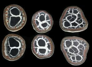 "1"" Cut and Polished Septarian Nodules"