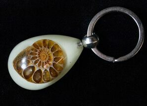 Authentic Fossil Ammonite Keychain - Glow In The Dark