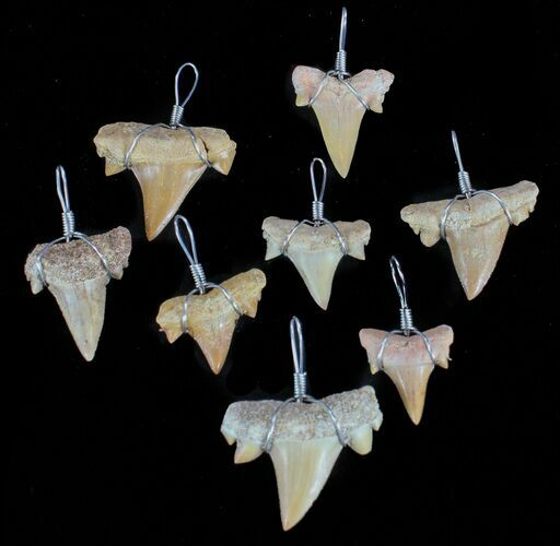 Wire Wrapped, Fossil Shark (Serratolamna) Tooth Pendants - Photo 1