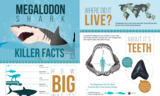 "24x36"" Megalodon Infographic Poster (Matte) - Photo 2"