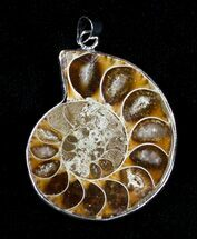Buy Polished Ammonite Pendant - #3616