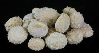 Various - Fossils For Sale - #30465
