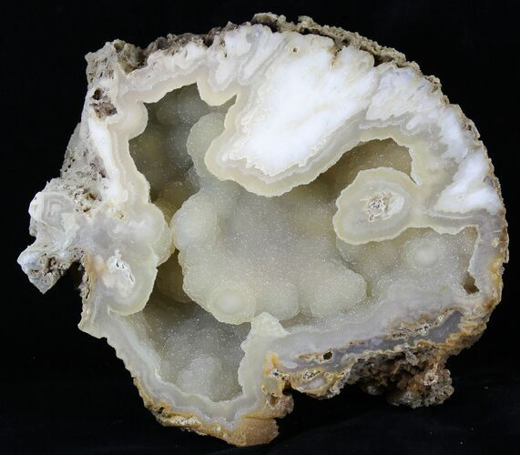 "7.8"" Agatized Fossil Coral With Druzy Quartz - Florida"