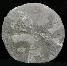 "Buy Large 5"" Pyrite Sun - Illinois - #31165"