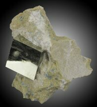 Pyrite - Fossils For Sale - #31119