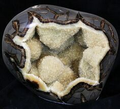Septarian - Fossils For Sale - #33126