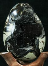 "4.7"" Septarian ""Dragon Egg"" Geode - Black Calcite Crystals For Sale, #33977"