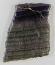 "Buy 5"" Polished Fluorite Slab - Purple, Green & Gold - #34846"