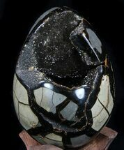 Septarian with Calcite  - Fossils For Sale - #36048