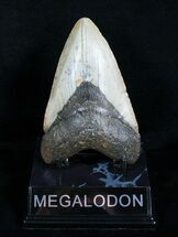 4.57 Inch Megalodon Shark Tooth For Sale, #4064