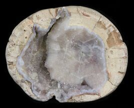 "2.5"" Crystal Filled Dugway Geode (Polished Half) For Sale, #38870"