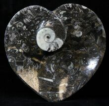 "4.5"" Heart Shaped Fossil Goniatite Dish For Sale, #39329"
