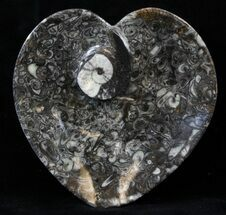 "4.5"" Heart Shaped Fossil Goniatite Dish For Sale, #39335"