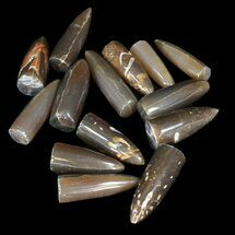 Bulk Polished Belemnites - 5 Pack For Sale, #42302