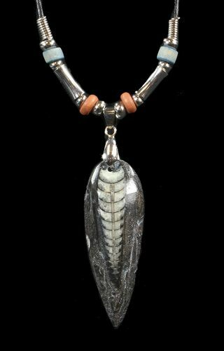 Fossil Orthoceras (Devonian Cephalopod) Necklace