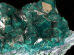 "2.3"" Gemmy Dioptase Cluster (Large Crystals) - Namibia - #44660-1"