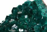 "Exceptional 2.6"" Gemmy Dioptase Cluster - Namibia  - #44661-5"