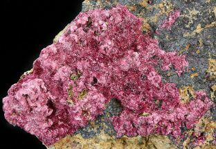 "2.9"" Fibrous Roselite Crystals on Matrix - Morocco For Sale, #44762"