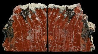 "Buy 5.1"" Tall Arizona Petrified Wood Bookends - Deep Red - #45367"