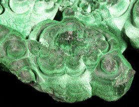 "Buy 4.2"" Fibrous Malachite Crystal Cluster - Congo - #45337"