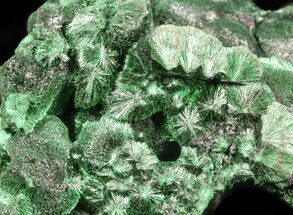 Malachite  - Fossils For Sale - #45339