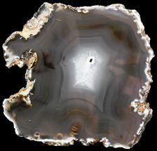 "6.9"" Polished Brazilian Agate Slice For Sale, #46061"