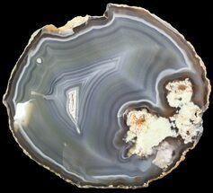 "6.6"" Polished Brazilian Agate Slice For Sale, #46073"