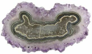"2.8"" Amethyst Stalactite Slice - Uruguay For Sale, #46247"