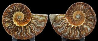 "3.25"" Sliced Fossil Ammonite Pair - Agatized For Sale, #46517"