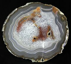 Agate - Fossils For Sale - #31332