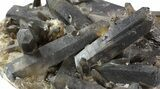 "Huge, 11.6"" Smoky Quartz Cluster - Brazil (Special Price) - #47193-3"