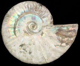 "Buy 5.1"" Silver Iridescent Ammonite - Madagascar - #47491"
