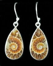 Fossil Ammonite Earrings - Sterling Silver For Sale, #48752