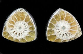Buy Fossil Ammonite Earrings (Studs) - Sterling Silver - #48757
