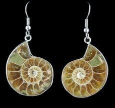 Fossil Ammonite Earrings - 110 Million Years Old For Sale, #48824