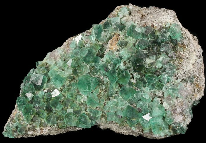 "Gorgeous 8.2"" Fluorite & Galena Plate -  Rogerley Mine"