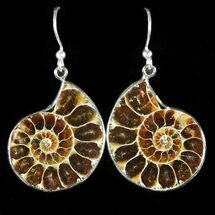Fossil Ammonite Earrings - 110 Million Years Old For Sale, #48827