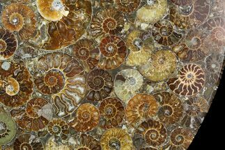 "Buy 12"" Plate Made Of Agatized Ammonite Fossils - #51052"