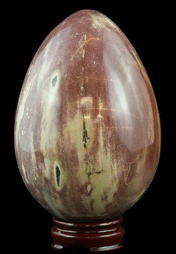 "6.3"" Colorful, Polished Petrified Wood ""Egg"" - Madagascar"
