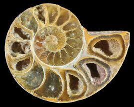 "Buy 2.9"" Sliced, Agatized Ammonite Fossil (Half) - Jurassic - #54049"