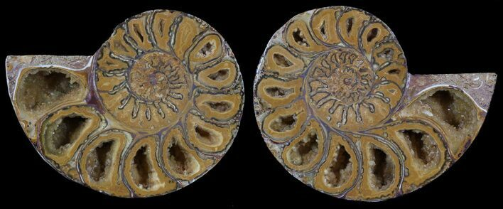 "2.95"" Cut & Polished, Agatized Ammonite Fossil - Jurassic"