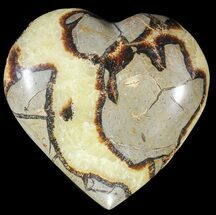 Septarian - Fossils For Sale - #54690