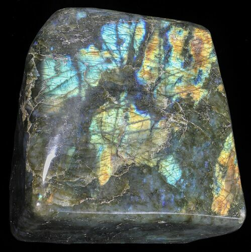 "4.4"" Flashy Polished Free Form Labradorite"