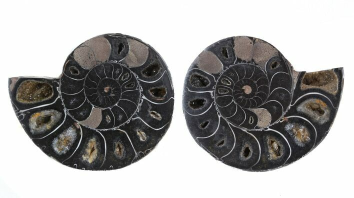 "2.9"" Split Black/Orange Ammonite Pair - Anapuzosia?"